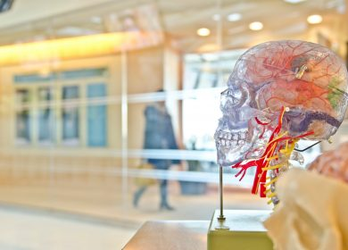 View of transparent skull with nervous system and brain with glass windows showing a hall in the background